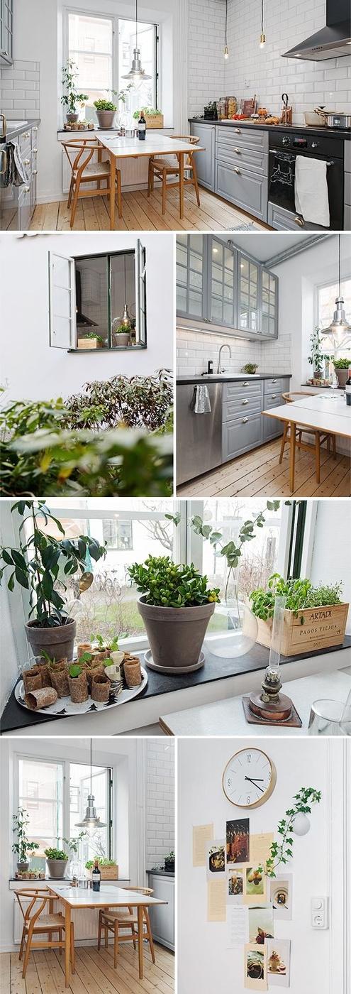 [kitchen] [plants]