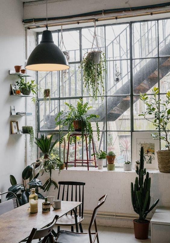 [plants] big window