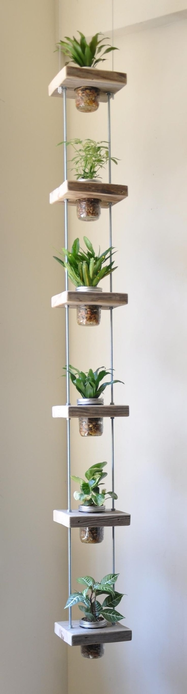 [plants] lil plants