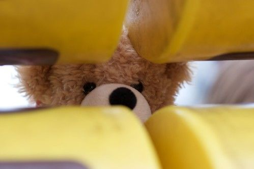 Teddy hiding at the play park
